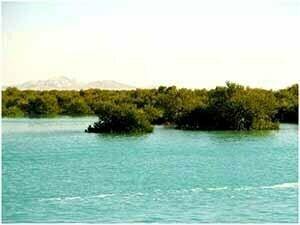 جنگل حرا جزیره قشم