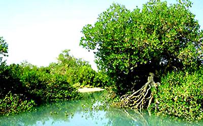 زیست شناسی جنگل حرا