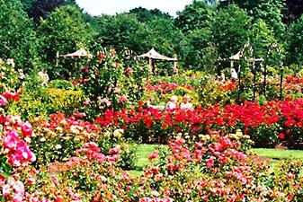 rose garden bangkok