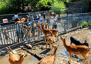 باغ وحش ارمنستان