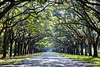 تونل درختی گرجستان