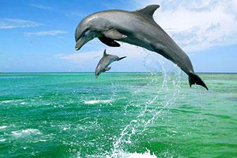 دلفین قشم