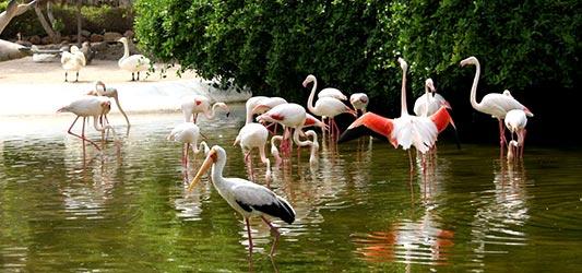 پارک پرندگان مجموعه دلفیناریوم
