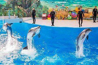 dolphin park kish 1