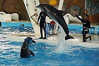 مجموعه تفریحی دلفین